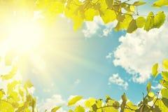 Hojas y luz del sol del cielo azul Foto de archivo libre de regalías