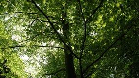 Hojas y luz del sol del verde metrajes