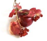 Hojas y manzana de otoño Fotos de archivo libres de regalías