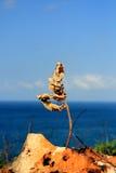 Hojas y mar Fotos de archivo libres de regalías