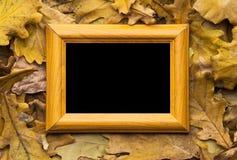 Hojas y marco de la foto Imágenes de archivo libres de regalías
