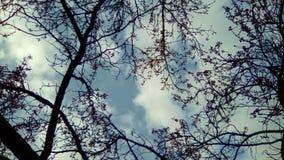 Hojas y nubes Imagenes de archivo