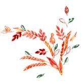 Hojas y oídos pintados a mano de la naranja del otoño de la acuarela Decoración de la acción de gracias Imagenes de archivo