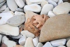Hojas y piedras Foto de archivo