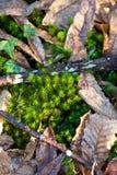 Hojas y plantas de otoño Fotografía de archivo libre de regalías