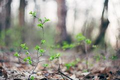 Hojas y ramitas de la vegetación del verde del piso del bosque foto de archivo