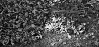 Hojas y rastrillo blancos y negros Imagen de archivo libre de regalías