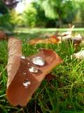 Hojas y rocío caidos de otoño Imagen de archivo libre de regalías
