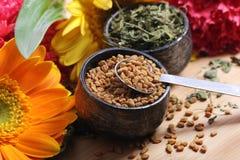 Hojas y semillas secas de la alholva Imagen de archivo libre de regalías
