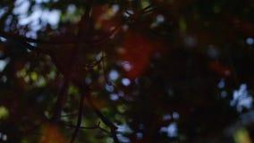 Hojas y silueta de los árboles almacen de metraje de vídeo