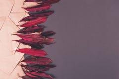 Hojas y sobre rojos en fondo coloreado foto de archivo libre de regalías