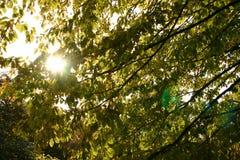 Hojas y sol Imagen de archivo