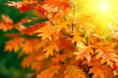 Hojas y sol Imagen de archivo libre de regalías