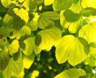 Hojas y sol del verde Foto de archivo libre de regalías