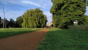 Hojas y sombras verdes de árboles almacen de video