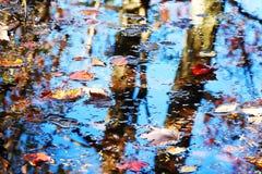 Hojas y textura del agua foto de archivo libre de regalías