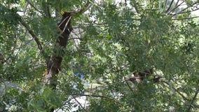 Hojee de un árbol - moviéndose en el viento almacen de metraje de vídeo