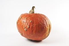 Hokaido pumpkin Royalty Free Stock Photography
