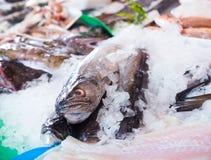 Hoki no mercado de peixes Foto de Stock Royalty Free
