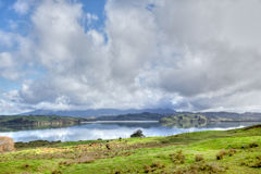 Hokianga Harbour Meadow Stock Image
