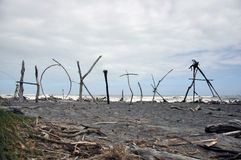 Hokitika driftwood Royalty Free Stock Photo