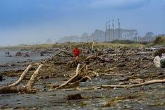 Hokitika new zealand - november2,2015 : uprooted and dry tree st stock images