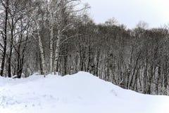 Hokkaido Στοκ Φωτογραφία