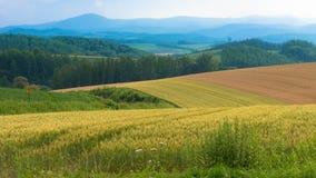 Hokkaido-Bauernhof lizenzfreie stockfotografie