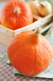 Hokkaido and Butternut Pumpkin Stock Photos