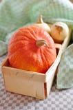 Hokkaido and Butternut Pumpkin Royalty Free Stock Image