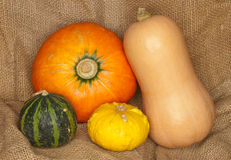 Hokkaido, butternut and warty pumpkins Stock Photography