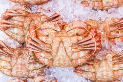 Hokkaido crabs on ice in Hakodate morning market. Fresh Hokkaido crabs on ice in Hakodate morning market Royalty Free Stock Photos