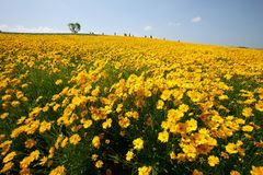 Hokkaido Huahai Royalty Free Stock Photo