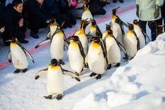 HOKKAIDO, JAPÃO - 10 de fevereiro de 2017 - março do pinguim em Asahiyama foto de stock royalty free