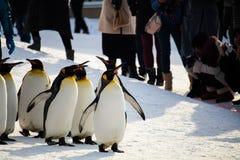HOKKAIDO, JAPÃO - 10 de fevereiro de 2017 - março do pinguim em Asahiyama imagens de stock royalty free