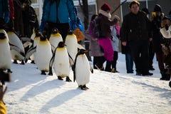 HOKKAIDO, JAPÃO - 10 DE FEVEREIRO DE 2017: março do pinguim em Asahiyama fotos de stock royalty free