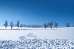 Hokkaido Japan Royaltyfri Foto