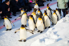 HOKKAIDO, JAPAN - FEBRUARI 10, 2017 - Pinguïn maart in Asahiyama royalty-vrije stock foto