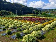 Hokkaido, Japonia, 22 2017 Lipiec: Niezidentyfikowani ludzie bierze obrazki uprawy w Tomita gospodarstwie rolnym są jeden wiele g Zdjęcie Royalty Free