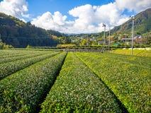 Hokkaido, Japonia, 22 2017 Lipiec: Zakończenie uprawy w Tomita gospodarstwie rolnym up jest jeden wiele gospodarstwa rolne które  Zdjęcia Stock