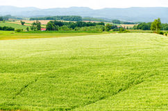 Hokkaido landscape : field for agriculture in the  Stock Photo
