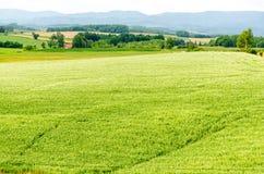 Hokkaido-Landschaft: Feld für die Landwirtschaft im Berg im Cl Stockfoto