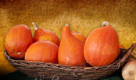 Hokkaido orange pumpkins in a basket Royalty Free Stock Photo
