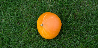 Hokkaido pumpkin. On the grass Stock Photography