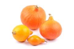 Hokkaido pumpkins Stock Photography