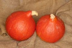 Hokkaido pumpkins, Cucurbita maxima. Two Hokkaido pumpkins, Cucurbita maxima 'Red Hokkaido', on a jute bag Royalty Free Stock Image