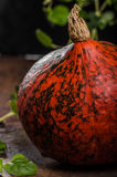 Hokkaido pumpkins rustic Stock Photography
