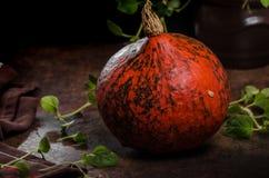 Hokkaido pumpkins rustic Royalty Free Stock Photos
