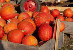 Hokkaido pumpkins for sale Stock Photos