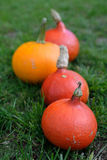 Hokkaido pumpkins in season. Red and orange hokkaido pumpkins, decorated on the grass in a row with shallow DOF Stock Photos